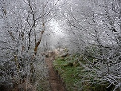 An image of a section of track on Norland Moor in the frost.